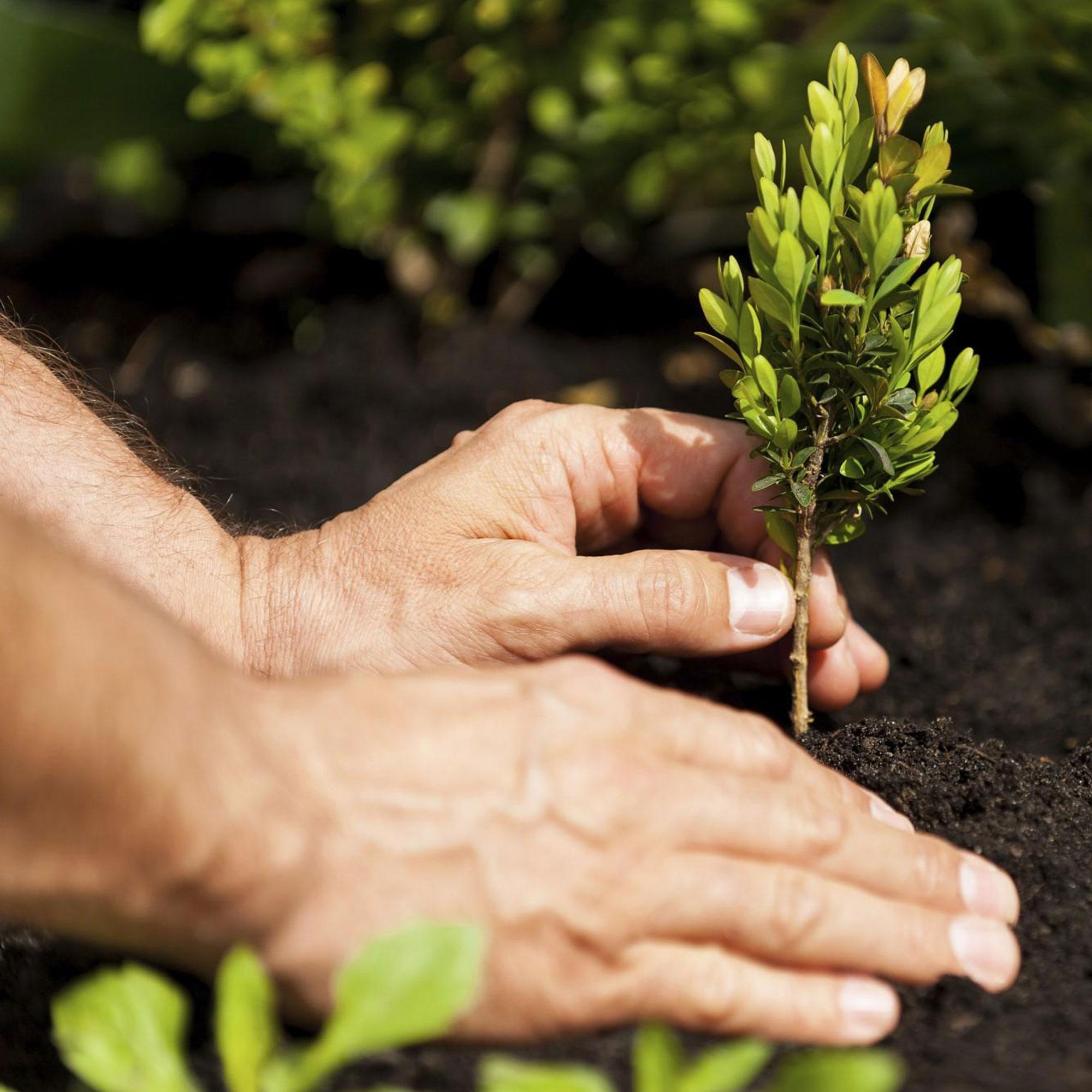 coltivazione pianta